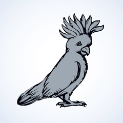 Parrot. Vector drawing
