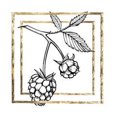 Hand drawn raspberry set isolated on white background. Retro sketch style vector illustration. Gold frame.