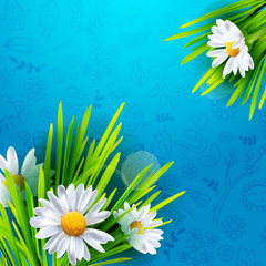Realistic Green grass on fresh blue background with realistic chamomiles. Flowers banner with hand drawn doodle pattern. Vector illustration. Place for text