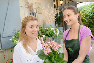 Florist giving lady a pot plant, outdoors