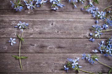 periwinkle on old wooden background