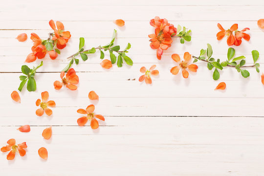 orange flowers on white wooden background