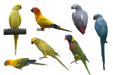 Big set of parrots  isolated on white background