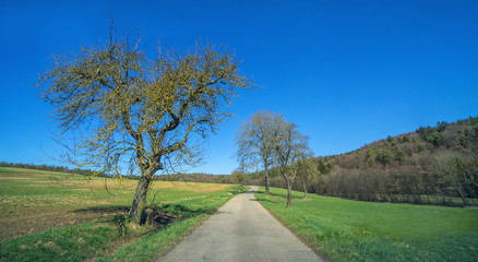 Landscape view to the rural countryside in spring