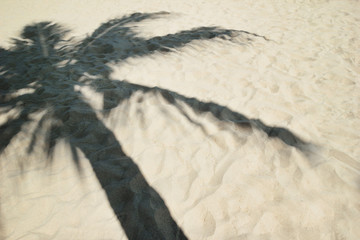 Shadow from palm tree on a sandy beach.