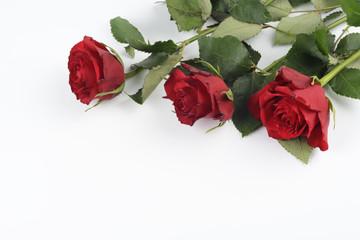 Rosas sobre fondo blanco, detalle