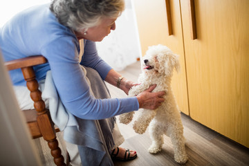 Senior woman playing with dog