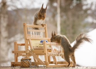 red squirrels with a weaving loom