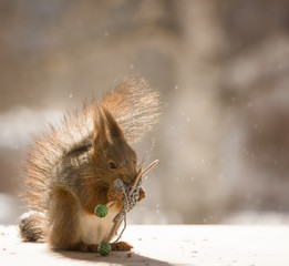 red squirrel holding knitting needles
