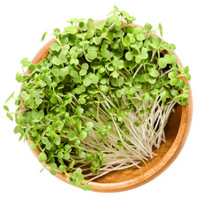 White mustard microgreen in wooden bowl. Fresh sprouts and young leaves of Sinapis alba, also yellow mustard, an edible herb. Shoots and cotyledons. Macro food photo, close up, from above, over white.