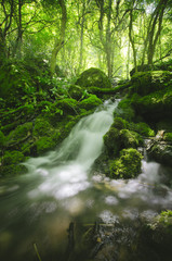 Foto op Canvas waterfall and lush vegetation in green natural woods