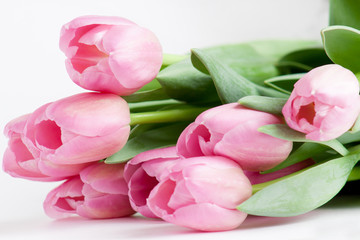 Group of pink tulips are lying on white background.