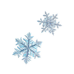 Two snowflakes isolated on white background. Macro photo of real snow crystals: large stellar dendrites with complex, ornate shapes, fine hexagonal symmetry, long, elegant arms with side branches.