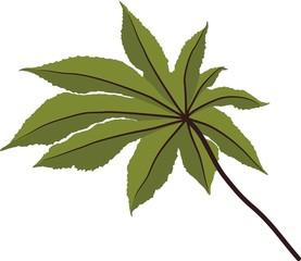 Foglia verde lobata di pianta tropicale