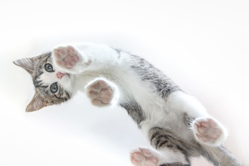 Cute cat. A view from below, stands on its paws. unusual angle. from below viev tsvzhhnhvn down.