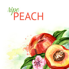 Peach  background. Watercolor hand drawn illustration