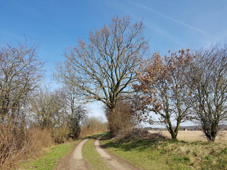 Country path with a markedly tree in North Germany in spring