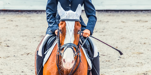 Bay dressage horse with blue eye and rider in uniform performing jump at show jumping competition. Equestrian sport background. Bay horse portrait during dressage competition.