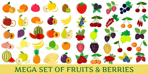 Mega set of fresh fruits and berries illustrations on a white background.