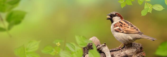 Vögel 82 Fototapete