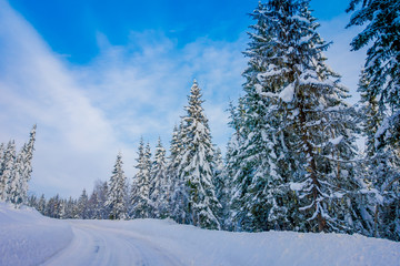 Beautiful outdoor view of winter road covered with heavy snow and ice in the forest