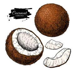 Vector hand drawn coconut set. Tropical summer fruit  illustrati