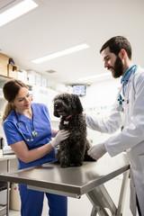 Vets examining dog