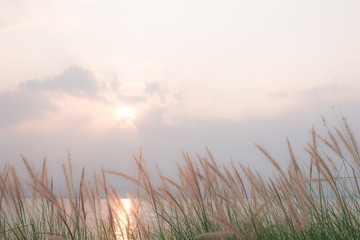 seascape nature Flowers, grass swaying with the wind blowing through the atmosphere at sunset to feel nostalgic