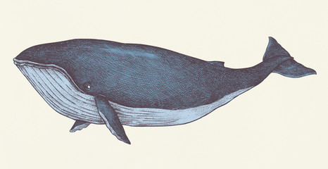 Hand drawn blue whale retro style
