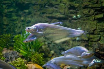 fish at aquarium, under water, animals