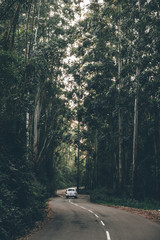 Auto entlang der Strasse baumallee