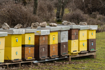 Apiary on a pasture in Croatia in spring
