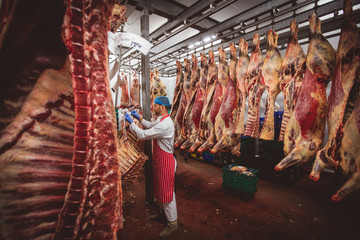 Butcher hanging red meat in storage room