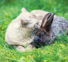 White cat and brown rabbit sitting together on green grass in spring. Easter concept