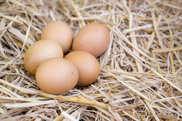 eggs in natural nest