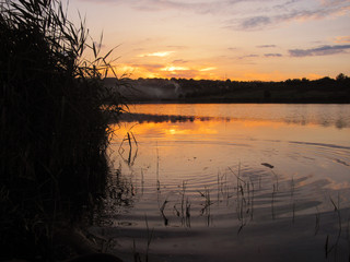 tranquil sunset on the lake with a cane and ripples in the water