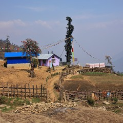 Scene on the way from Thulo Syabru to Chyolangpati. Spring day in the Langtang National Park, Nepal.