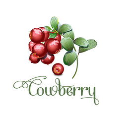 wild northern berries lingonberry foxberry, cowberry , cranberry. Simplified, reduced both details and colors for cardboard package reproduction