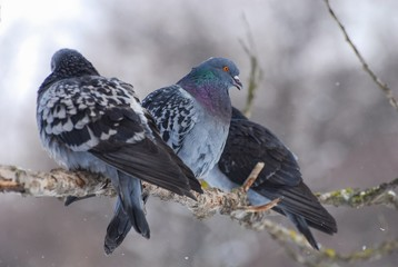 """Pigeons in the city park """"Holosiyvsky"""", Kyiv, Ukraine"""