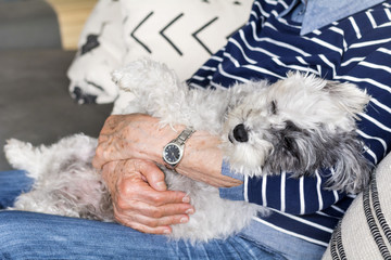 Senior Woman Hugging her Poodle Dog at Home.Sleeping Dog