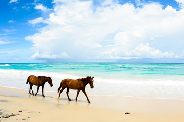 wild horses in a beach in mexico