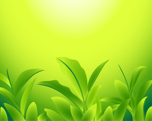 Vector illustration of a green tea leaf on a green yellow background.