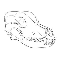 Object on white background skull dog sideways. Coloring for children