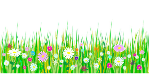 Spring grass and flowers borders. Easter decoration with spring grass and meadow flowers. Isolated on white background. Vector