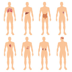 8 human body organ systems realistic educative anatomy physiology front back view flashcards poster vector illustration