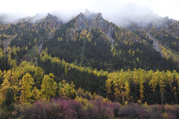 Forest and mountain landscape in autumn colours