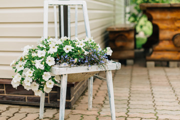 Flowers growing on the chair. Garden decoration