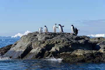 Adelie penguins on rock