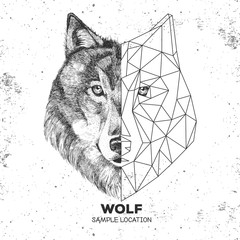Hipster animal realistic and polygonal wolf face. Triangle animal