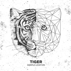 Hipster animal realistic and polygonal tiger face. Triangle animal